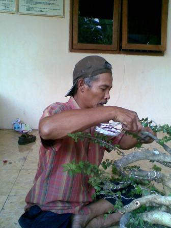 PROFIL Usaha Bonsai