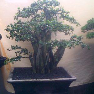 57. Serut 14 Model Natural tinggi 63 cm dm 23 cm