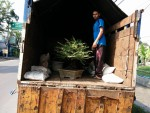 Pengiriman Bonsai 1 Kontainer ke Mitra Bonsai Pulau Seberang