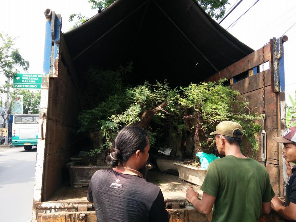 2. Pengiriman Bonsai