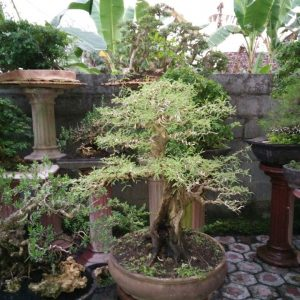 113. Arabica Natural